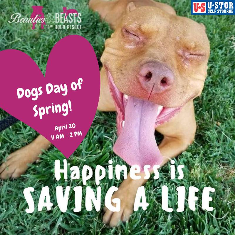 Dog Days of Spring Beauties and Beasts Dog Rescue Event
